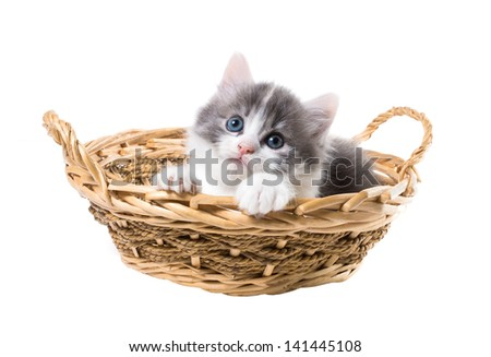 Charming three-color kitten in a basket isolated on white background - stock photo