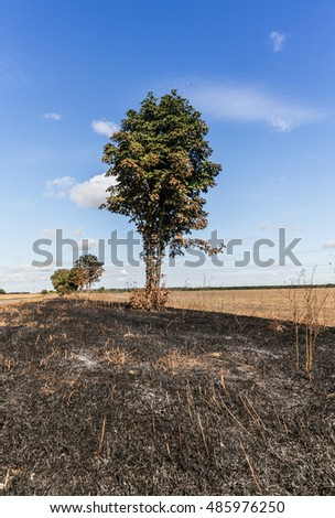 charred grass and a tree beside the road. Enviroment protection. The destruction of nature.