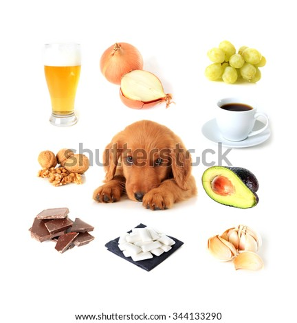 Chart of toxic foods for dogs. Also available with English text.  - stock photo
