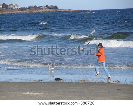 chasing seagulls - stock photo