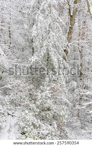 Chattahoochee national forest georgia usa february 24 effect of snow