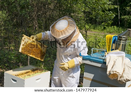 Checking Beehives - stock photo