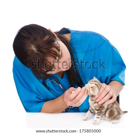 checking eyes of cat in veterinary clinic. isolated on white background