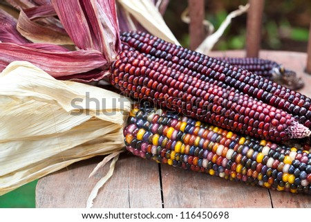 Cheerful and Colorful dried Indian Corn on wooden surface  as decoration for Thanksgiving Table, Halloween, and the Fall Season. Also available in vertical format. - stock photo