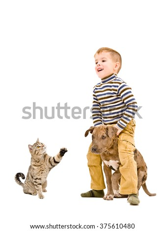 Cheerful boy playing with a puppy pitbull and cat isolated on white background  - stock photo