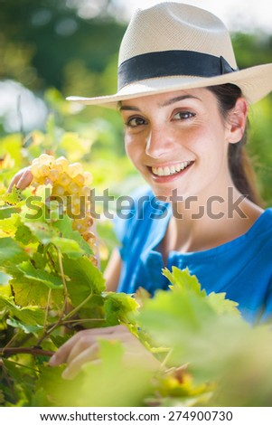 Cheerful woman picking some grapes in the garden by a sunny day - stock photo