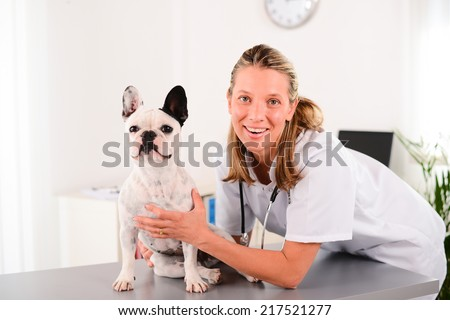 cheerful young blonde veterinary taking care and examining a beautiful pet dog french bulldog
