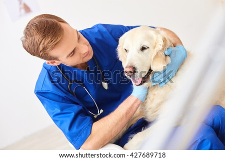 Cheerful young vet is examining a puppy - stock photo
