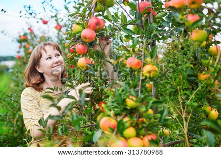 Cheerful young woman gathering ripe organic apples on farm or in garden