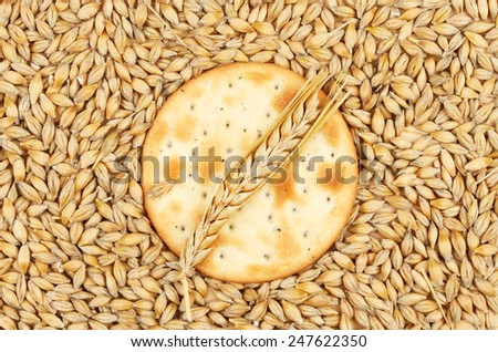 Cheese biscuit with a wheat ear surrounded by grains of wheat - stock photo