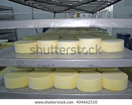 Cheese production at dairy farm - stock photo