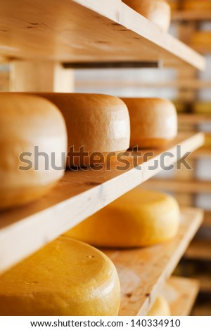 Cheese-wheels maturing on different shelves at the cheesemaker cellar - stock photo