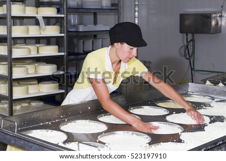 Cheesemaker preparing fresh cheese to divide it into several pieces and forms
