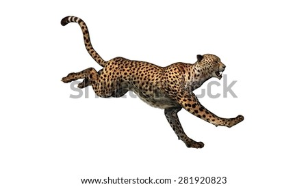 cheetah - isolated on white background