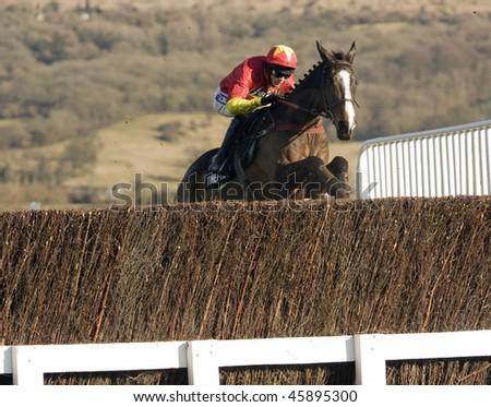CHELTENHAM, GlOUCS - JAN 30: Jockey Aiden Coleman takes Plein Pouvoir over fences in the second race at Cheltenham racecourse on January 30, 2010 in Cheltenham, Gloucs - stock photo