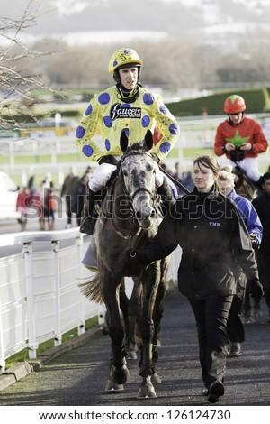 CHELTENHAM, GLOUCS-JANUARY 26: Jockey Aidan Coleman returns from the second race with Reynard d'irlande  at Festival Trials Day, Cheltenham Racecourse, Cheltenham UK on Jan 26, 2013. - stock photo