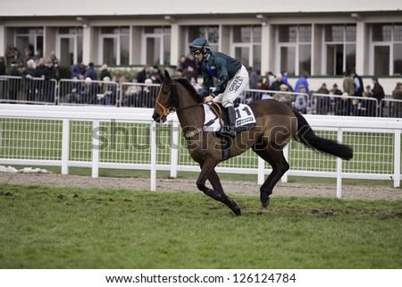 CHELTENHAM, GLOUCS-JANUARY 26: Jockey Jamie Moore takes Fruity O'Rooney out for the third race at Festival Trials Day, Cheltenham Racecourse, Cheltenham UK on Jan 26, 2013. - stock photo