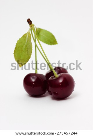 Cherries on a branch on a white background