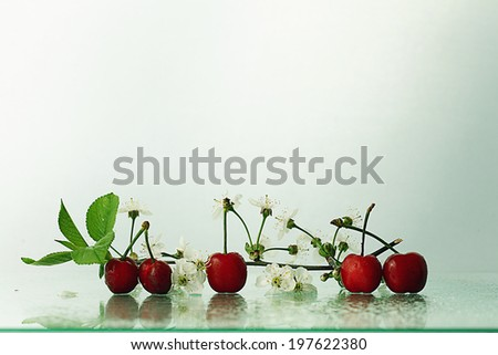 cherries on a white background with branches - stock photo