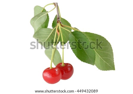 Cherry berries on white background. Two bright red cherries on a branch with green leaves. Beautiful light red fruit round shape.