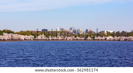 Cherry blossom around Tidal Basin with suburban buildings on the background in Washington DC, USA. Blossoming cherry trees around the water.  - stock photo