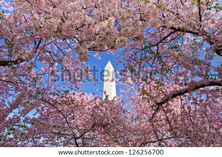 Cherry Blossom Festival at the National Mall. Washington, DC - stock photo