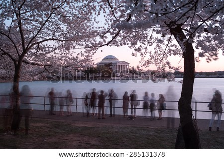 Cherry blossom festival at Thomas Jefferson Memorial in Washington DC, United States.