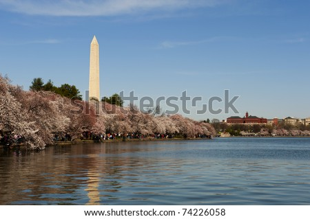 Cherry blossom festival in Washington DC from the tidal basin showing the Washington Monument. - stock photo