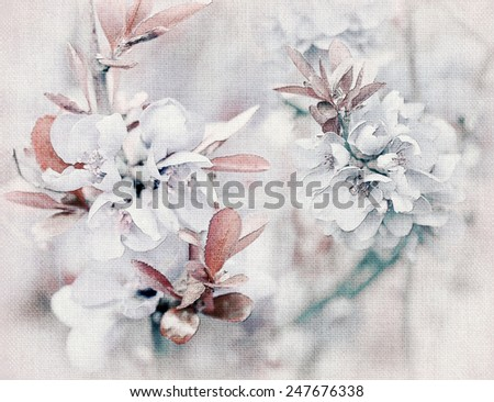 Cherry blossom illustration on canvas background - stock photo