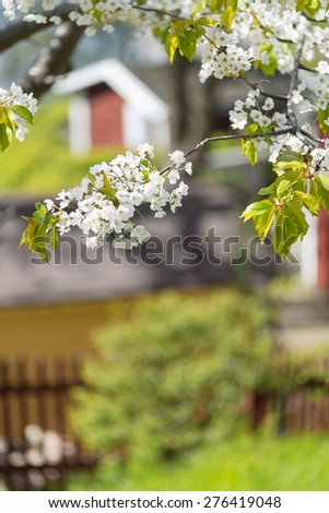 Cherry blossom in garden with red houses in blurry background, Sweden - stock photo