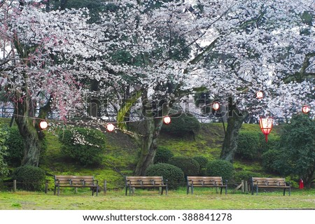 Cherry blossom in nagoya castle located in Nagoya , japan