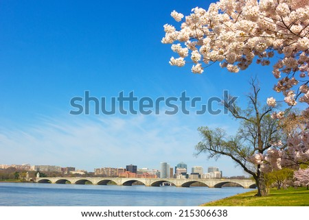 Cherry blossom near Potomac River in Washington DC. A View on Rosslyn skyscrapers and Arlington Memorial Bridge in spring - stock photo