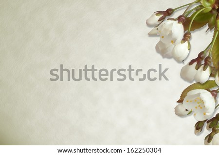 Cherry blossom on parchment paper background. - stock photo