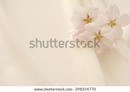 cherry blossom on white clothes background