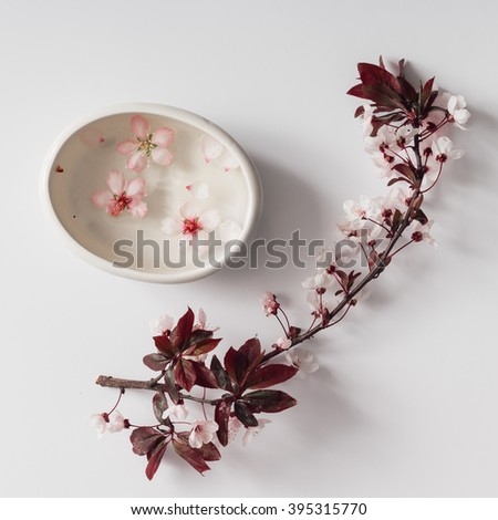 Cherry blossom twig with water bowl on white background. Flat lay. - stock photo