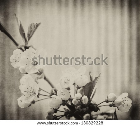 Cherry blossom with grunge texture - stock photo