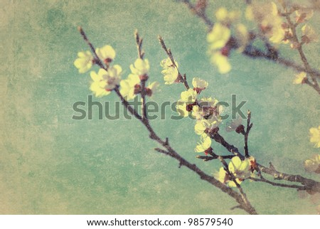 Cherry blossom with grunge texture overlay - stock photo