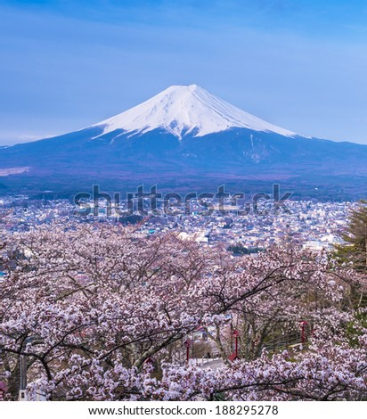cherry blossom with MT Fuji on the background - stock photo