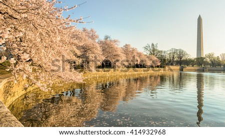 Cherry blossoms and the Washington Memorial reflecting in Tidal Basin, in Potomac Park, Washington, DC. - stock photo