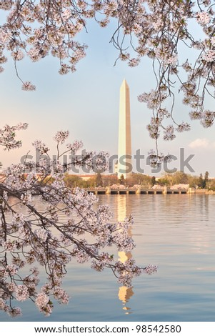Cherry blossoms around the Tidal Basin in Washington DC framing the Washington Monument reflected in the water. - stock photo