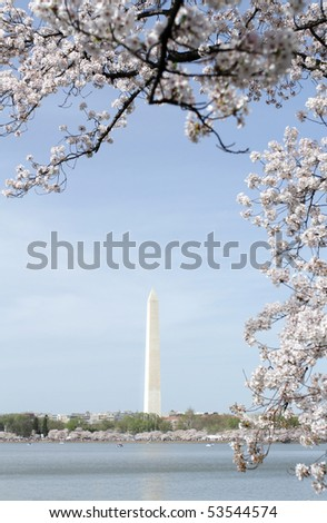 Cherry Blossoms around the Tidal Basin in Washington DC, view of the Washington Monument