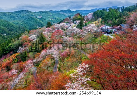 Cherry blossoms at Mount Yoshino (Yosinoyama) in Nara, Japan. Mount Yoshino has been Japan's most famous cherry blossom viewing spot for many centuries. - stock photo