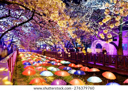 cherry blossoms at night, busan city in south korea - stock photo