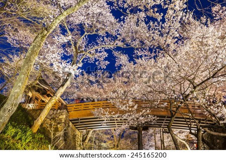 Cherry blossoms at Takato Castle Site Park, Nagano, Japan