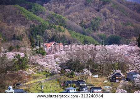 Cherry Blossoms at Takato Castle Site Park, Nagano, Japan - stock photo