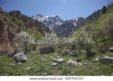 Cherry blossoms in a mountain valley