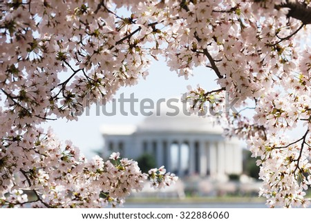 cherry blossoms in spring framing Jefferson Memorial in Washington DC - stock photo