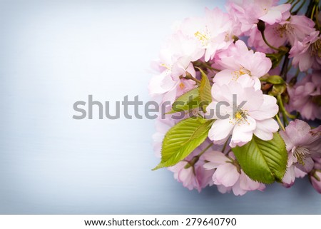 Cherry blossoms on a wooden background. Outdoor photography.