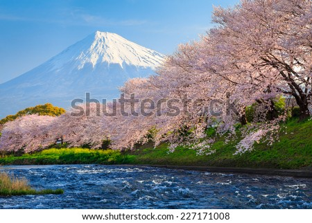 Cherry blossoms or Sakura and Mountain Fuji at the river in the morning - stock photo