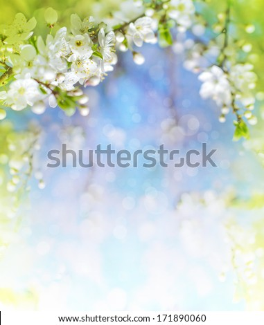 Cherry blossoms over blurred nature background/ Spring flowers/Spring Background with bokeh - stock photo